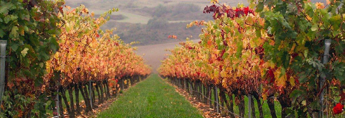 El vino del Camino 1ª etapa