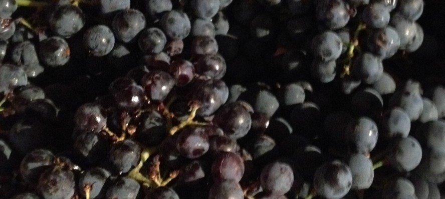 ¿Necesita el vino la adición de sulfitos?