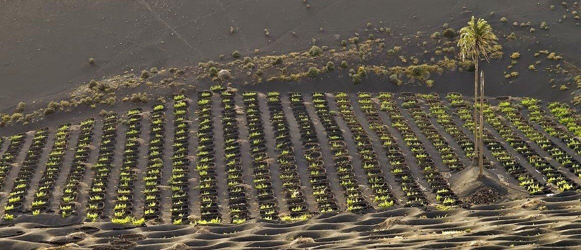 Lanzarote, ¡uno de los paisajes vitícolas más bellos del Mundo!