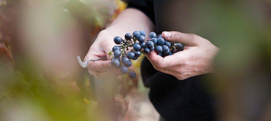vinos-singulares-mundovinum